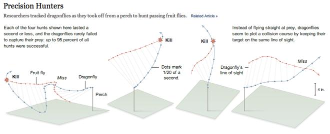 How dragonflies hunt