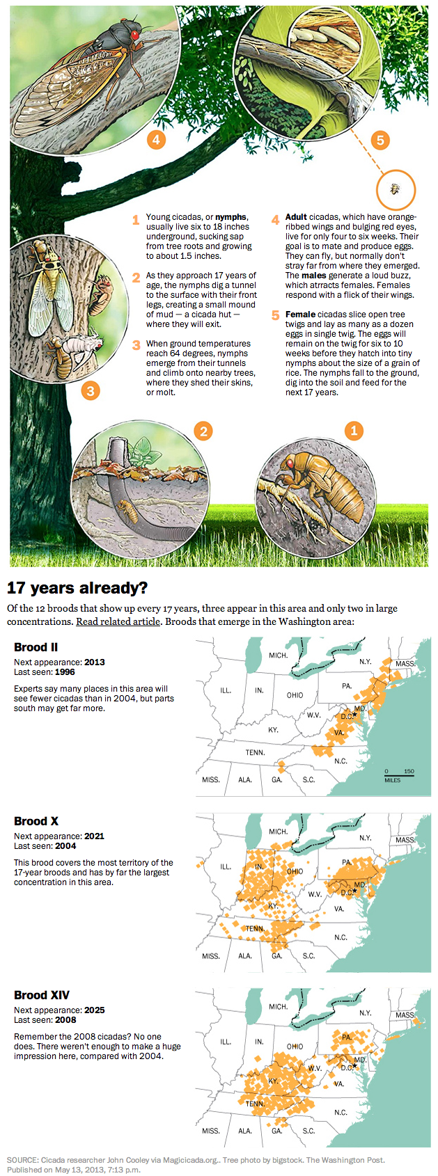 The Washington Post's explanation of the periodical cicadas